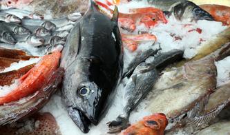 Poissonnerie Bruxelles - Maxi Pesca