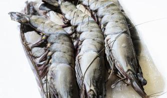 Maxi Pesca - Surgelé