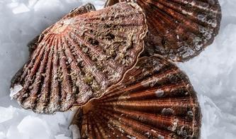 Maxi Pesca - Crustacé