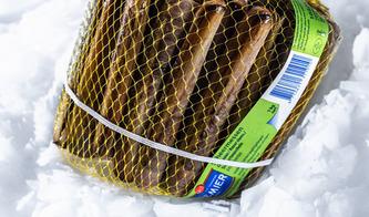 Maxi Pesca - Coquillage