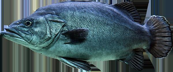 Maxi Pesca - Grossiste importateur en poissons et fruits de mer
